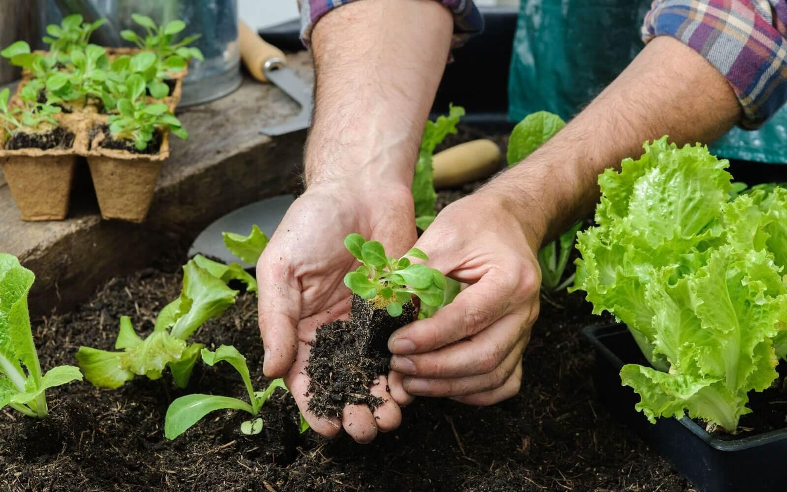Ternyata, Berkebun Sangat Bermanfaat bagi Kesehatan Penderita Diabetes